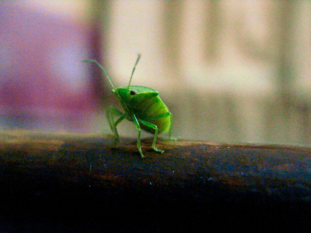 Little green guy by Sudipto Sarkar on Visioplanet Photography