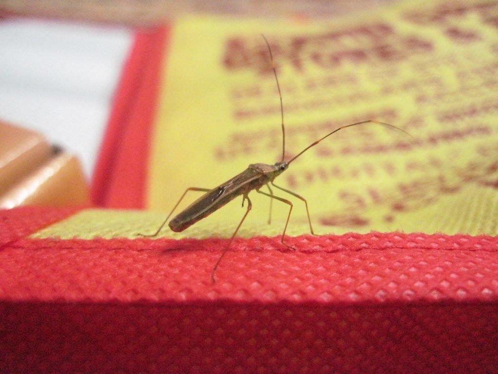 The rice bug by Sudipto Sarkar on Visioplanet