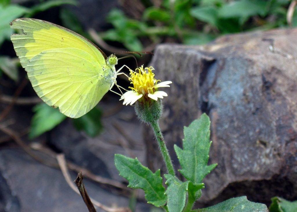 Sweet nectar by Sudipto Sarkar on Visioplanet