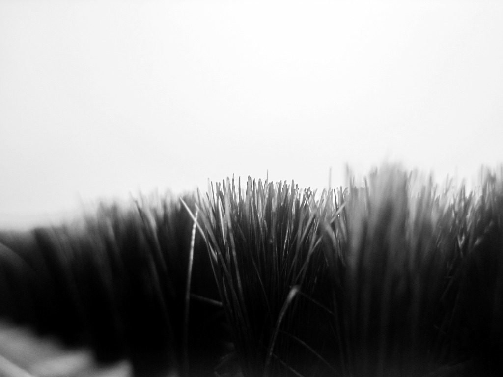 Black Grass by Sudipto Sarkar on Visioplanet