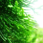 The Cedar by Sudipto Sarkar on Visioplanet Photography