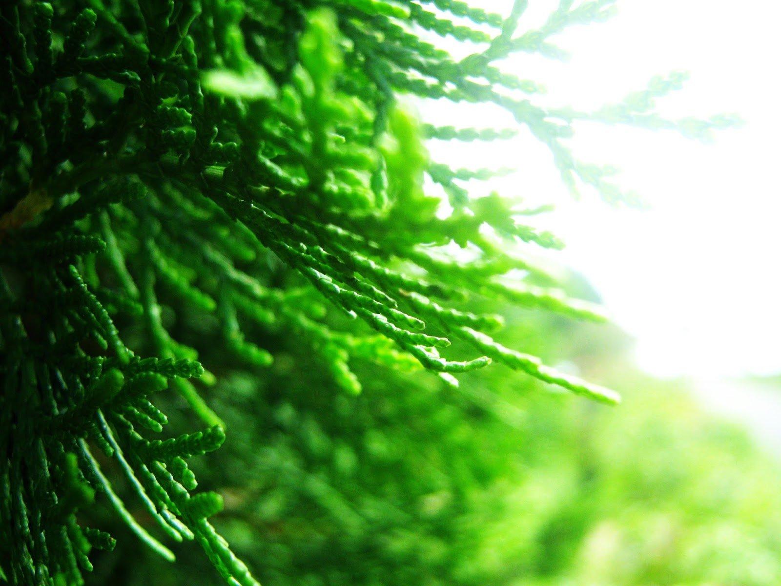 The Cedar by Sudipto Sarkar on Visioplanet Photography