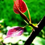 Leaves by Sudipto Sarkar on Visioplanet Photography