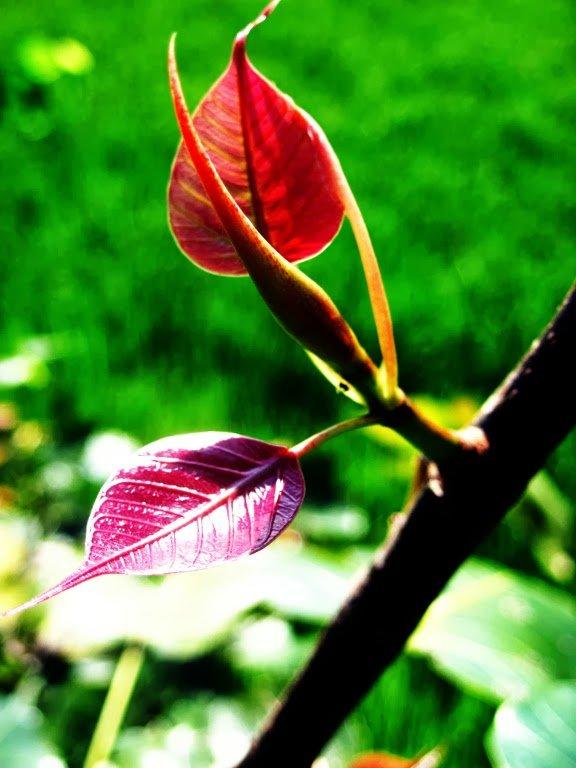Leaves by Sudipto Sarkar on Visioplanet