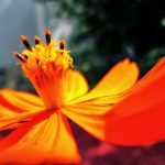 Orange by Sudipto Sarkar on Visioplanet Photography