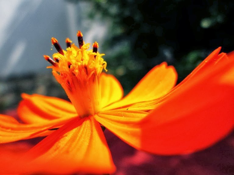 Orange by Sudipto Sarkar on Visioplanet