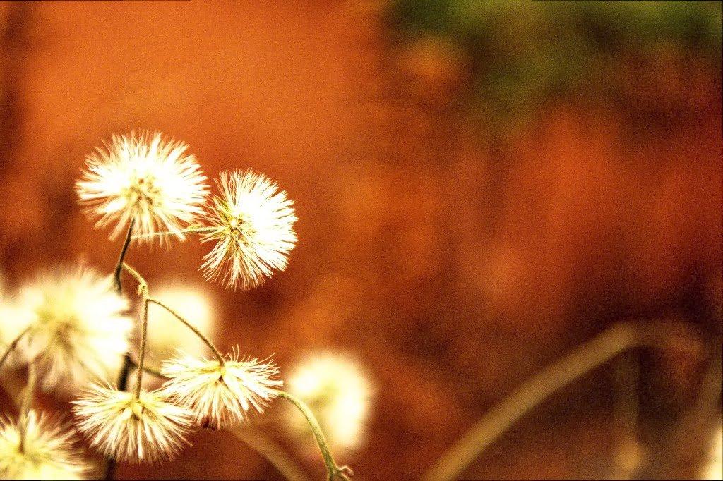 Flowers by Sudipto Sarkar on Visioplanet Photography