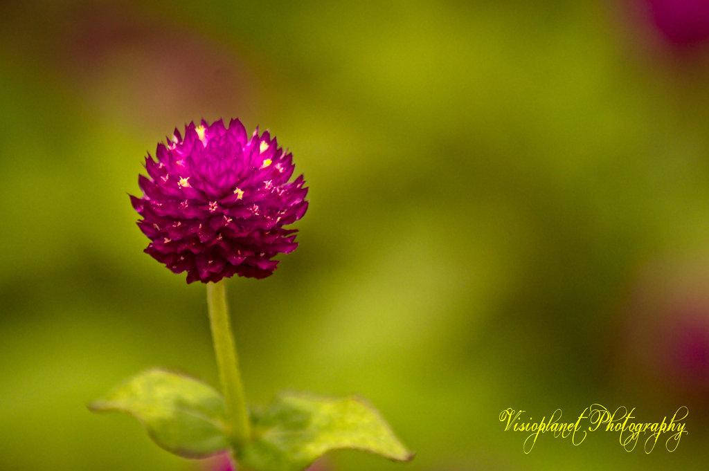 Flowerception by Sudipto Sarkar on Visioplanet Photography