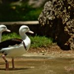 Duck Duck Go by Sudipto Sarkar on Visioplanet Photography