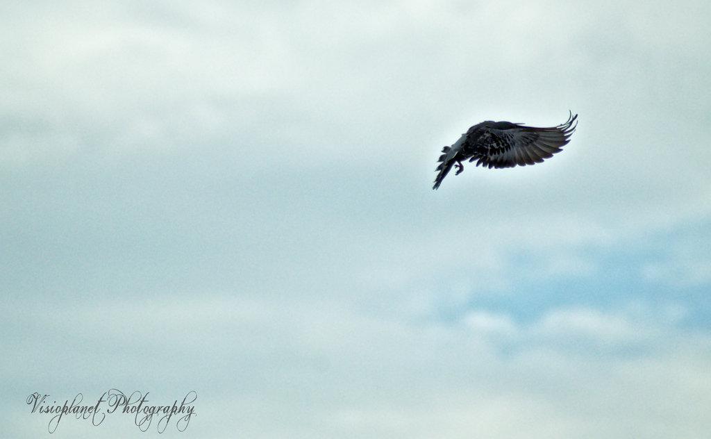 Fly Away by Sudipto Sarkar on Visioplanet Photography