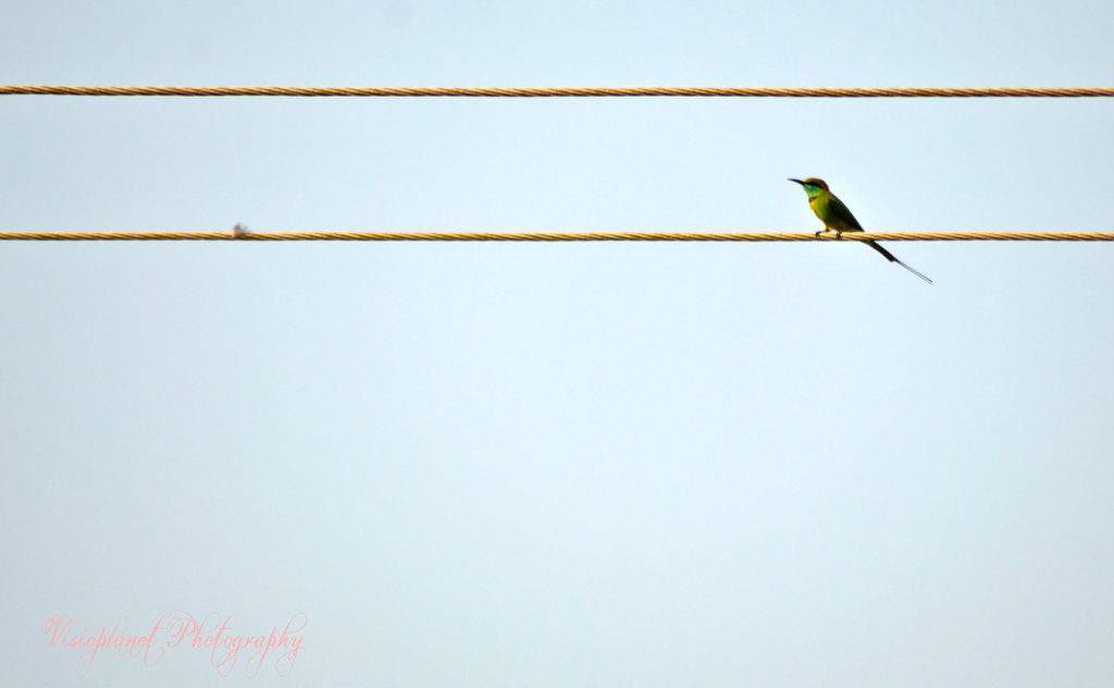 Green bee eater by Sudipto Sarkar on Visioplanet Photography