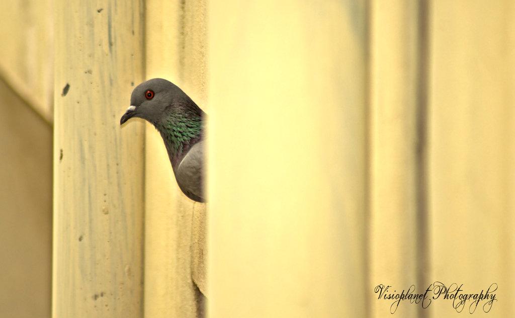 I hide, you seek! by Sudipto Sarkar on Visioplanet Photography