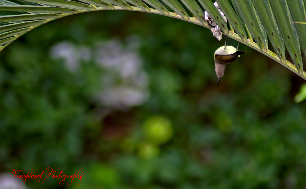 Just hanging by Sudipto Sarkar on Visioplanet Photography