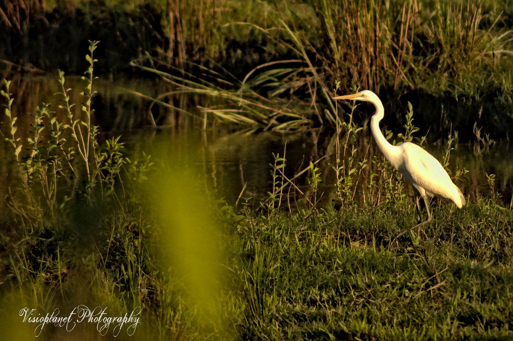 On the hunt by Sudipto Sarkar on Visioplanet Photography