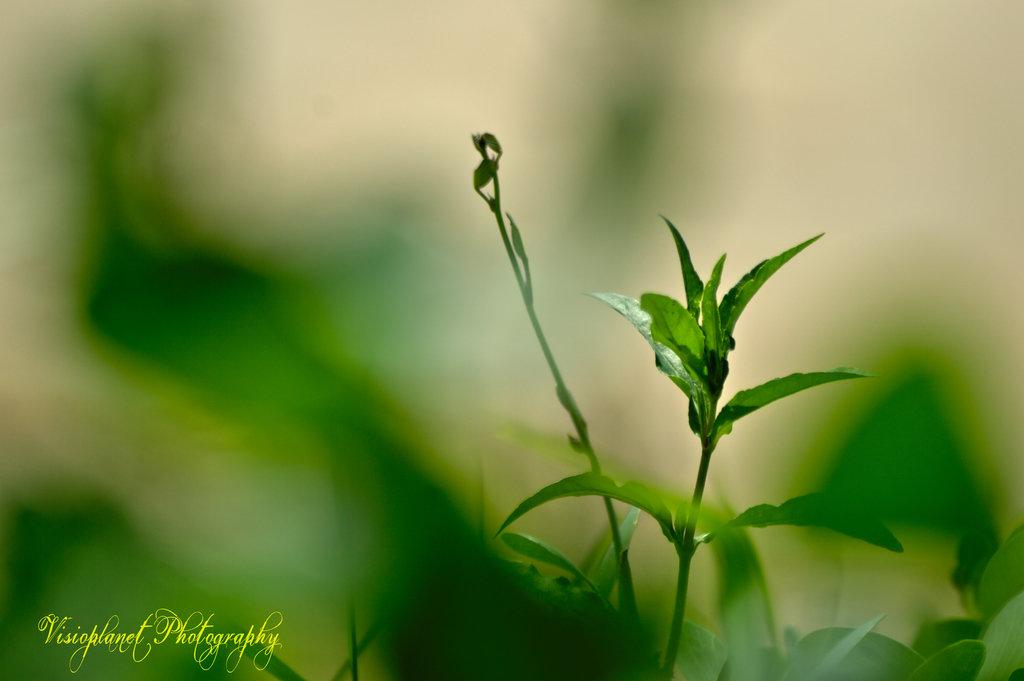 Peachy by Sudipto Sarkar on Visioplanet Photography