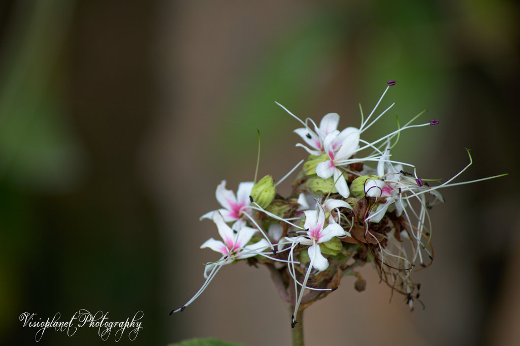 Pink and Purple by Sudipto Sarkar on Visioplanet Photography