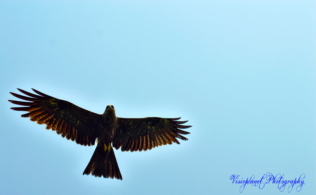 Soaring by Sudipto Sarkar on Visioplanet Photography