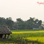 The Mustard Field by Sudipto Sarkar on Visioplanet Photography