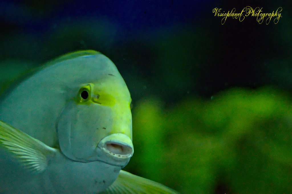 The Amazed Fish by Sudipto Sarkar on Visioplanet Photography