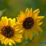 The Flowers of the Sun by Sudipto Sarkar on Visioplanet Photography