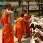 The Monk and His Sheep by Sudipto Sarkar on Visioplanet Photography