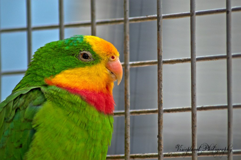 The True Parrot by Sudipto Sarkar on Visioplanet Photography