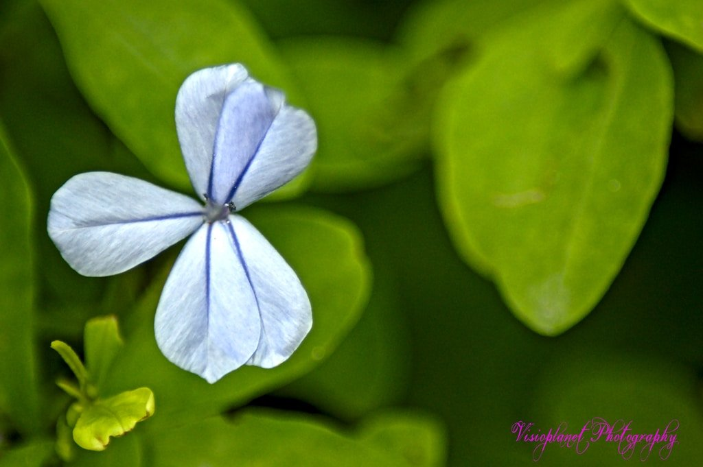 Unique by Sudipto Sarkar on Visioplanet Photography